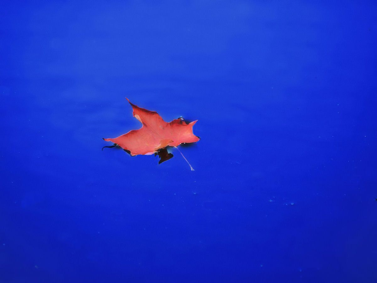 Photograph one leaf on a sea of blue by Grant MacDonald on 500px