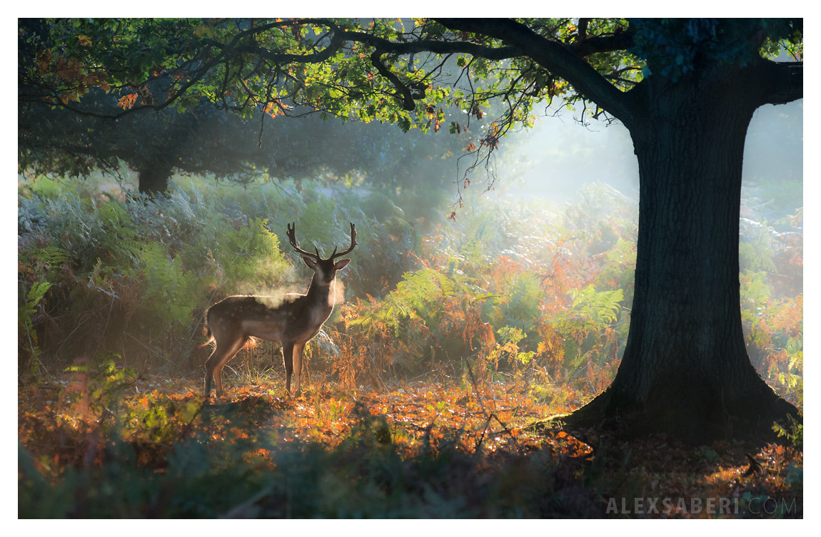 Photograph Breathless after Battle by alex saberi on 500px