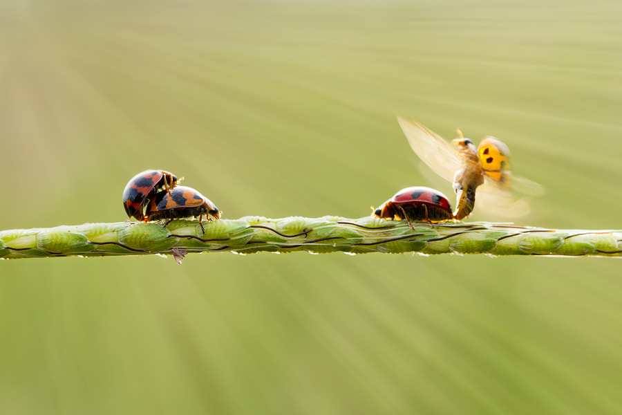 Photograph true love by  Hendy Mp on 500px
