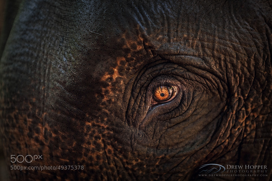 Photograph Close Encounter by Drew Hopper on 500px