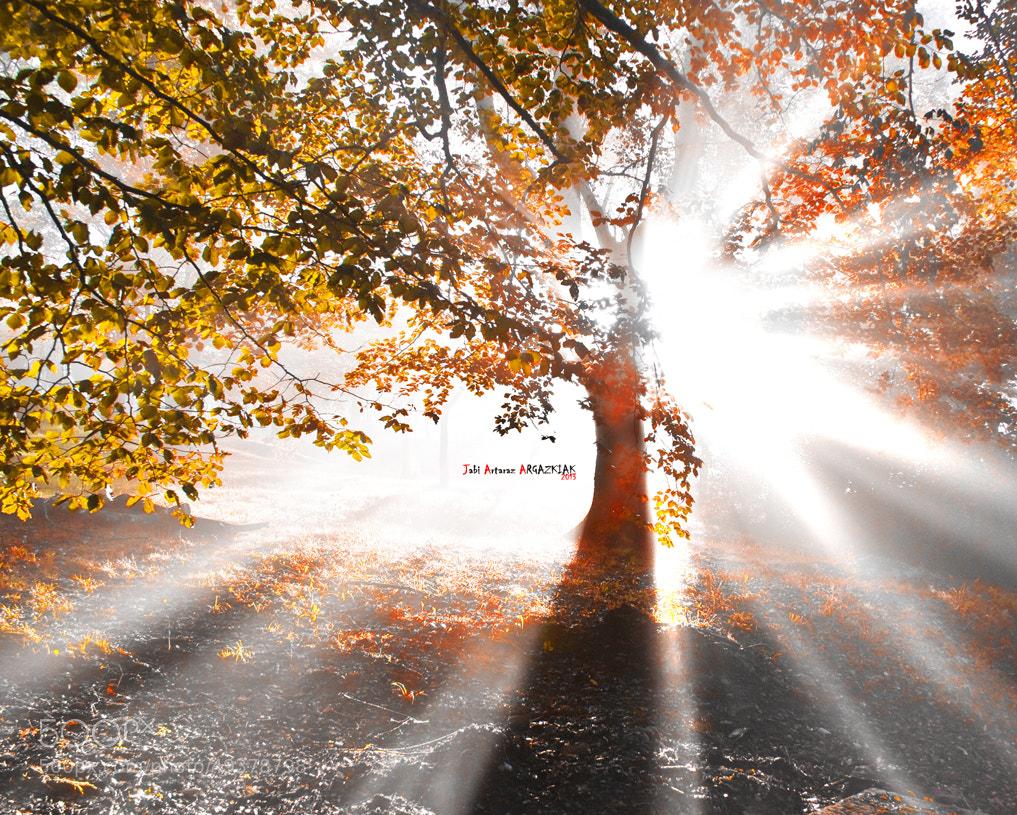 Photograph Resplandor en la niebla by Jabi Artaraz on 500px
