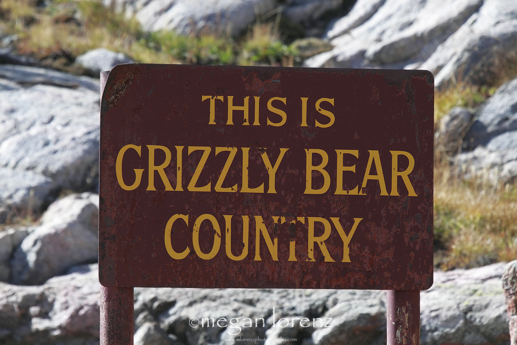 Photograph Grizzly Bear Country by Megan Lorenz on 500px