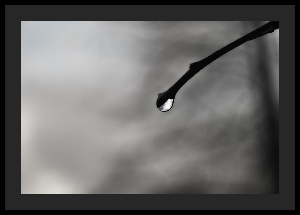 Photograph tears by nature by Emilie Haymann on 500px