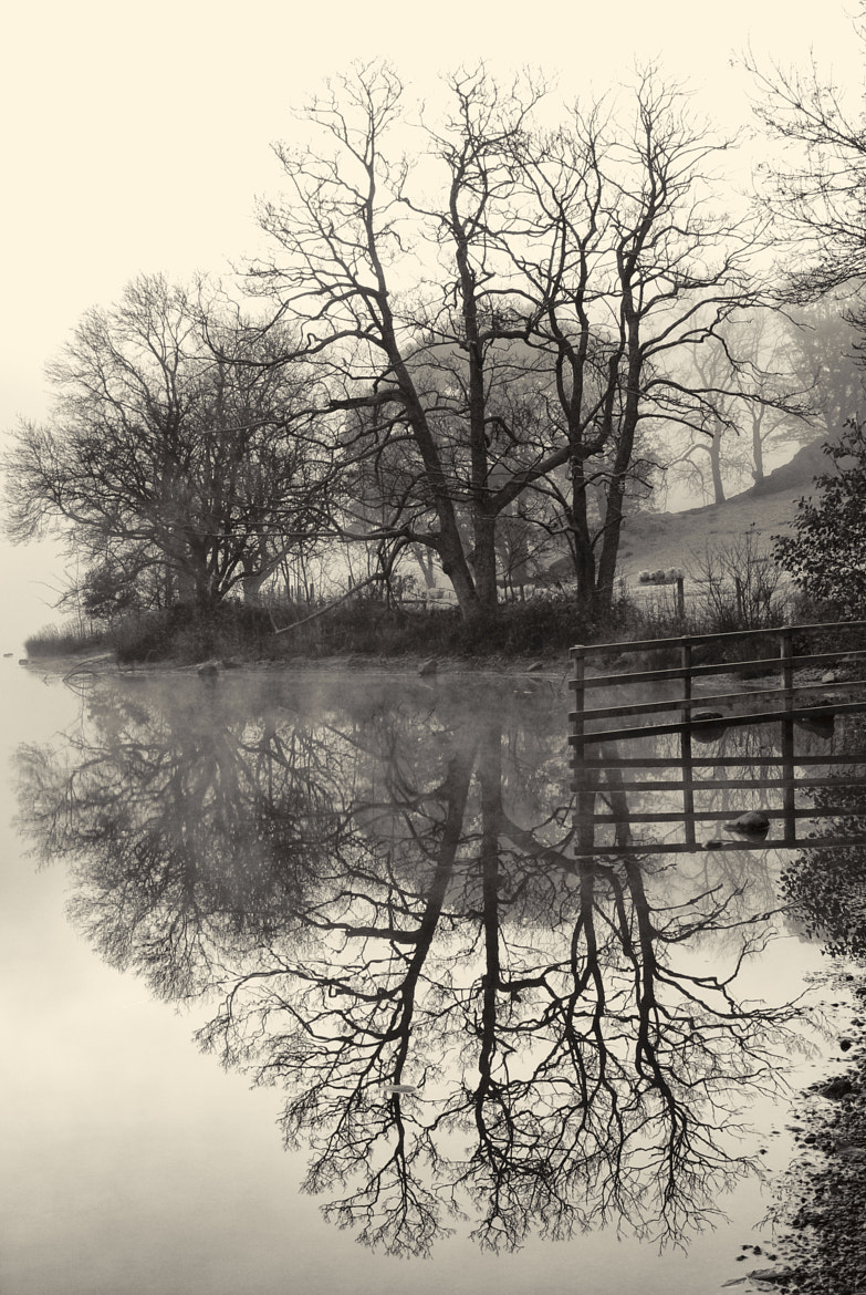 Photograph Fence Reflection by Dave Mercer on 500px