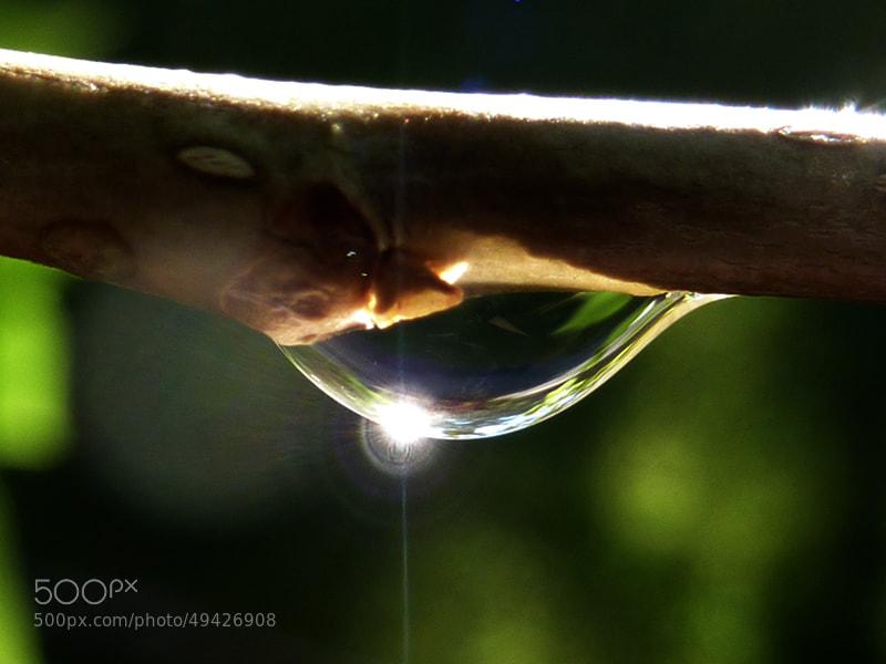 Photograph Shiny Drop by Milena Robinson on 500px