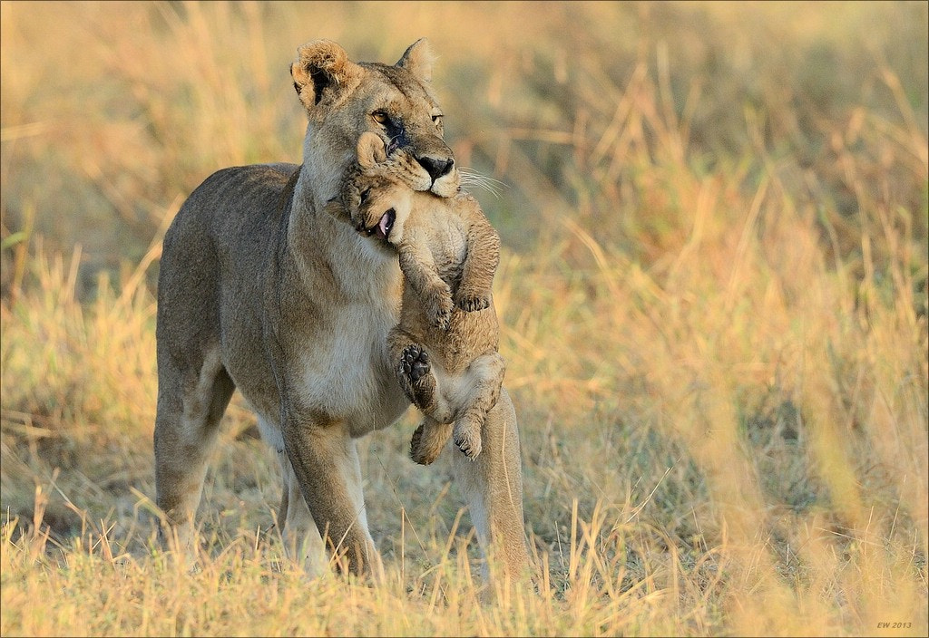 """Photograph """"Mom!""""... by Elmar Weiss on 500px"""