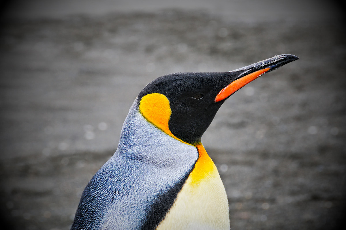 Photograph Portrait of a King by Tim McCullough on 500px