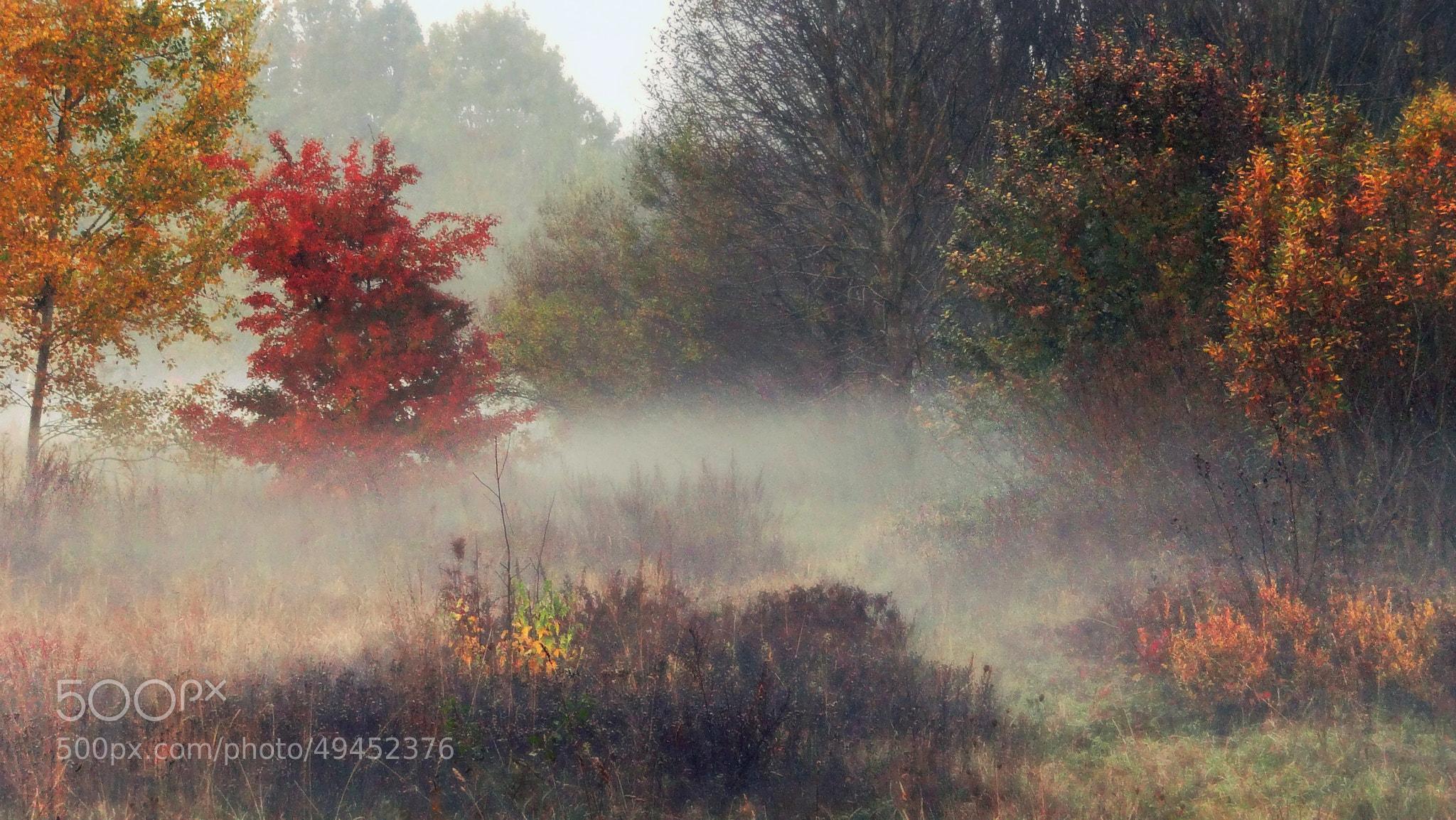 Photograph Autumn Mood by **  REgiNA  **  on 500px