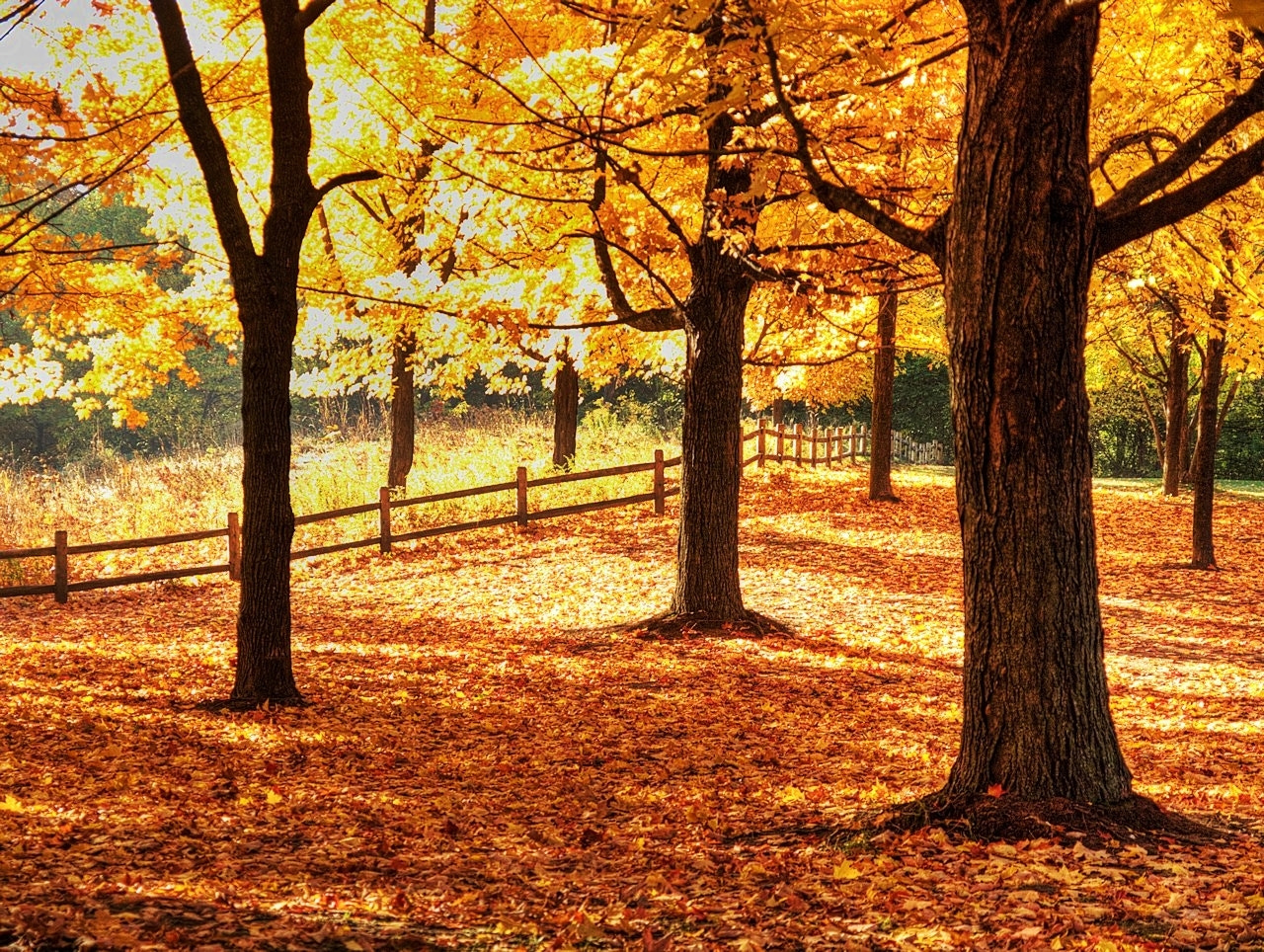 Photograph Autumn Fence by Grant MacDonald on 500px