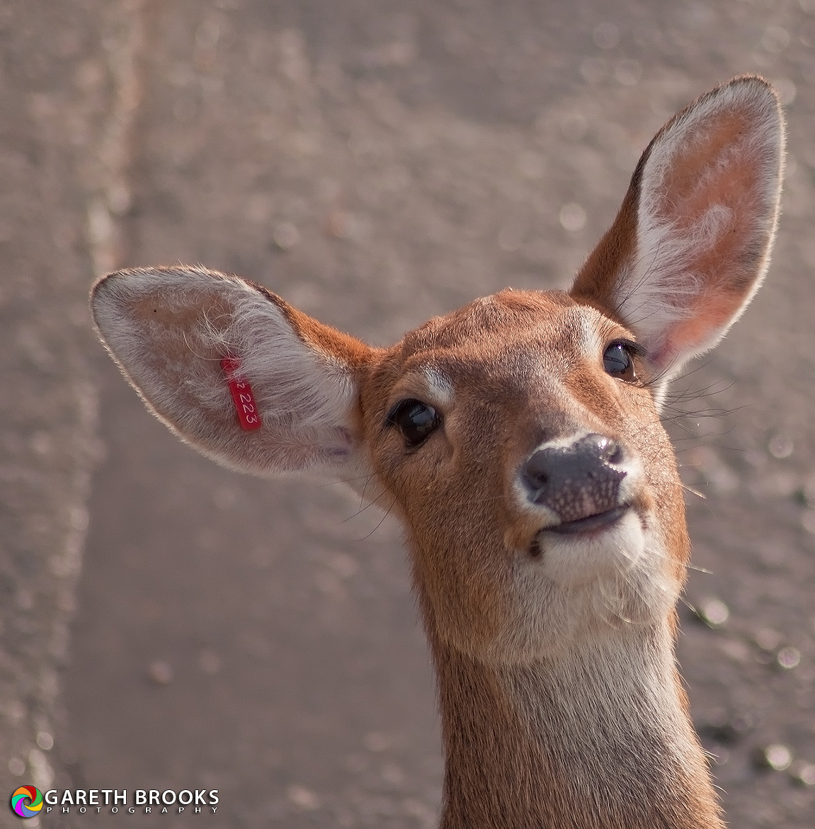Photograph Oh Deer! Please get my good side! by Gareth Brooks on 500px
