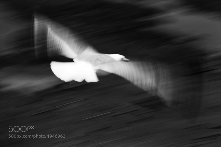seagull flying over sand