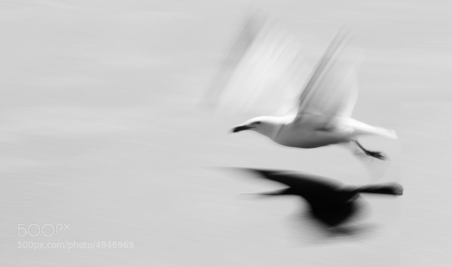 seagull flying over white sand