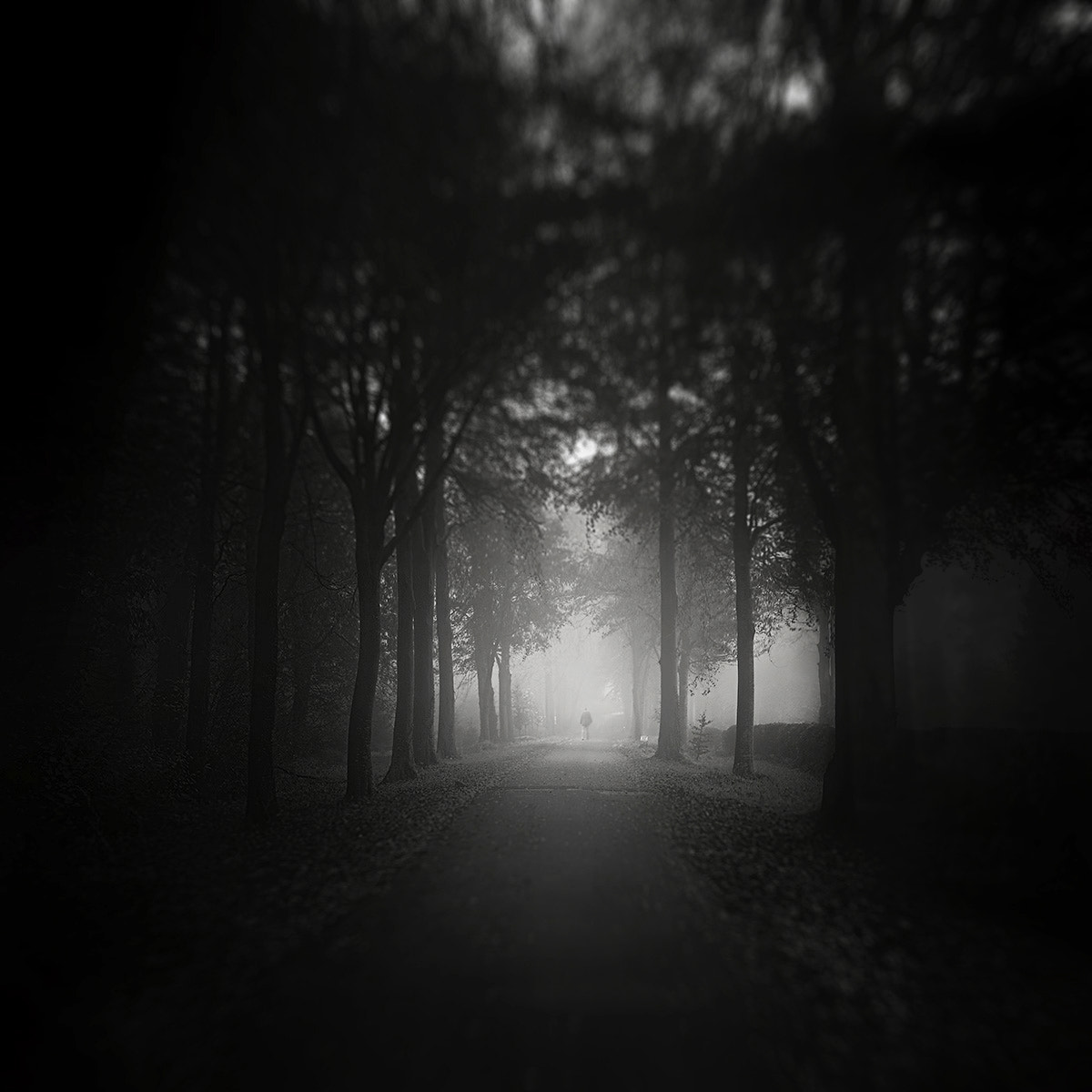 Photograph the path by Andy Lee on 500px