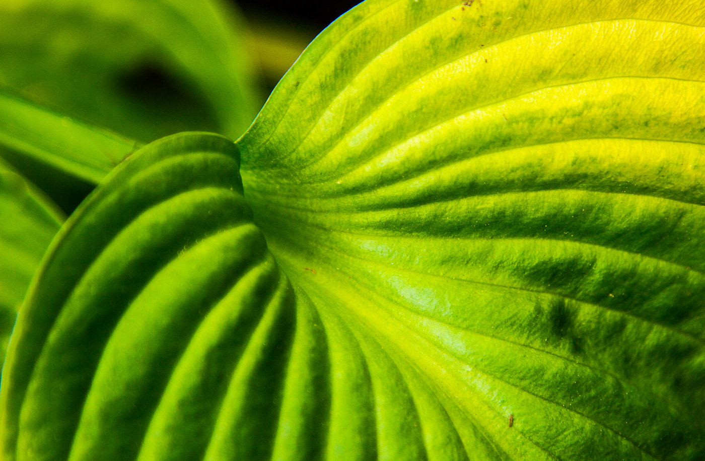 Photograph Waves of Green by Jeff Price-Jones on 500px