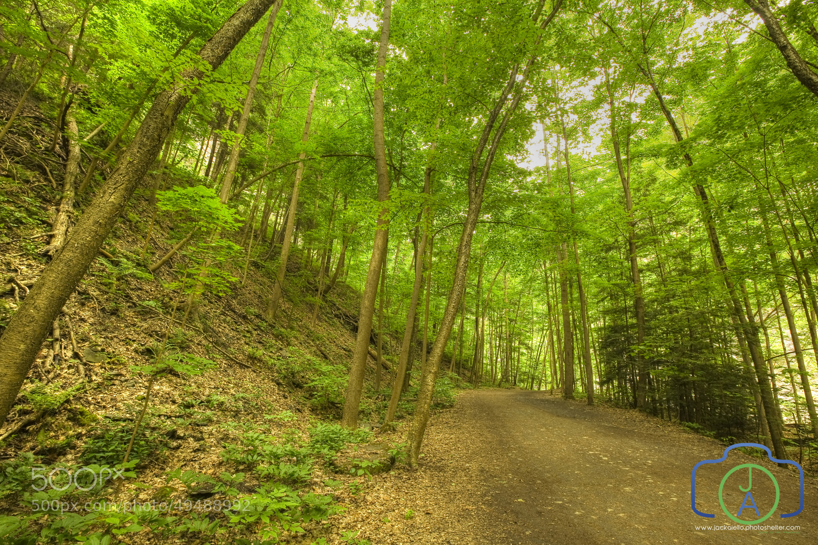 Photograph Hiking Path in a Forest - Green Leaf Canopy by Jack L. Aiello on 500px