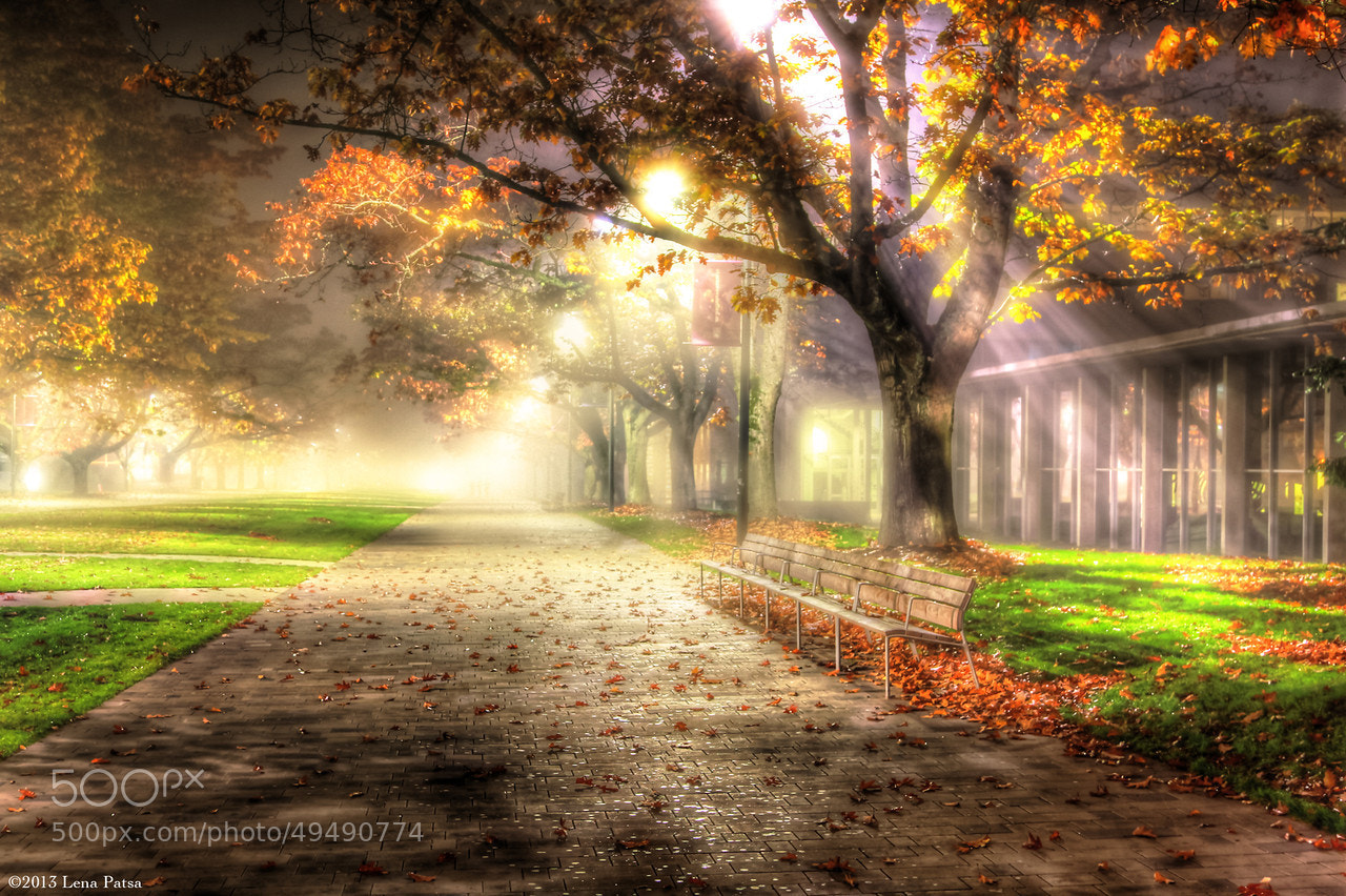 Photograph Fog on Main Mall by Lena Patsa on 500px