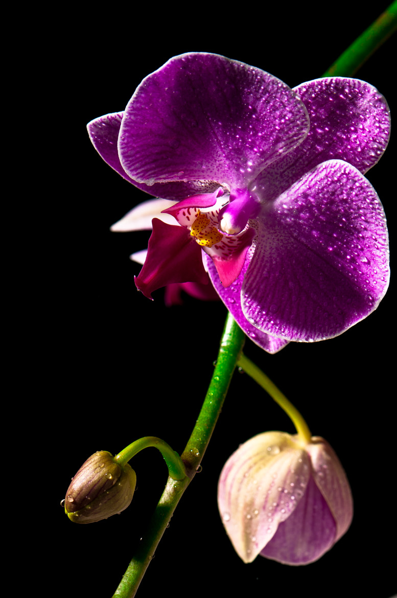 Photograph Orchidee by Louis Laliberté on 500px