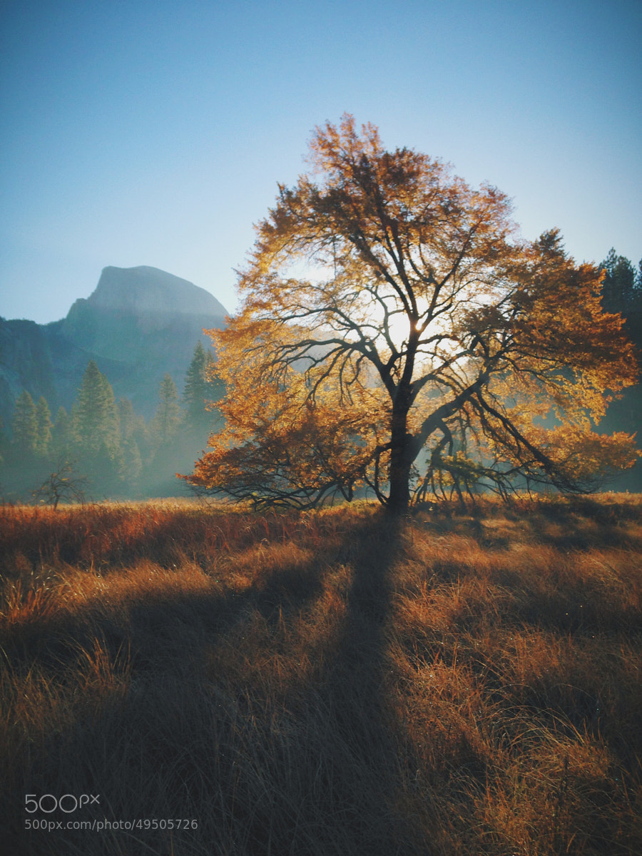 Photograph Autumn Morning, Half Dome, and an Elm Tree by James Forbes on 500px