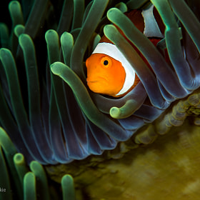 finding nemo by Wendy Capili-Wilkie on 500px.com