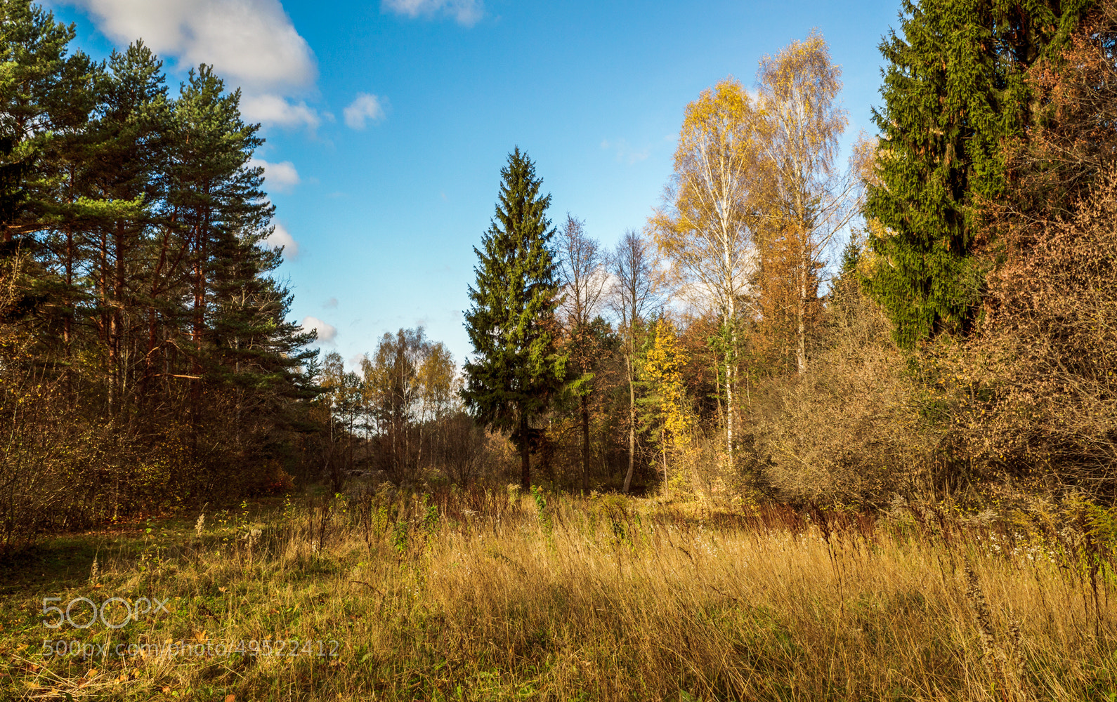Photograph Autumn scenery in forest by Norbert Durko on 500px