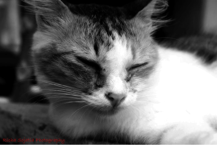 Photograph the cat  by richa  sojatia on 500px