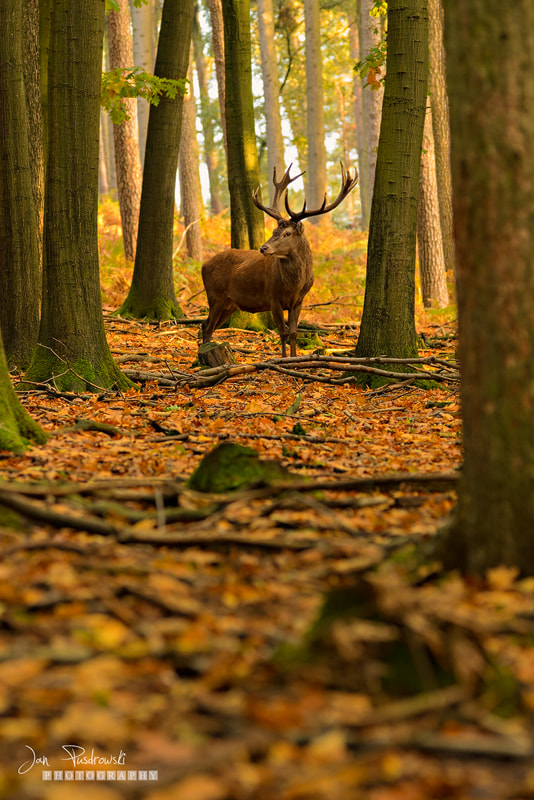 Photograph When the Woods were Young by Jan Pusdrowski on 500px