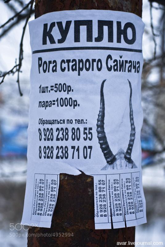 Куплю рога by Хайбула Ибрагимов (avar)) on 500px.com