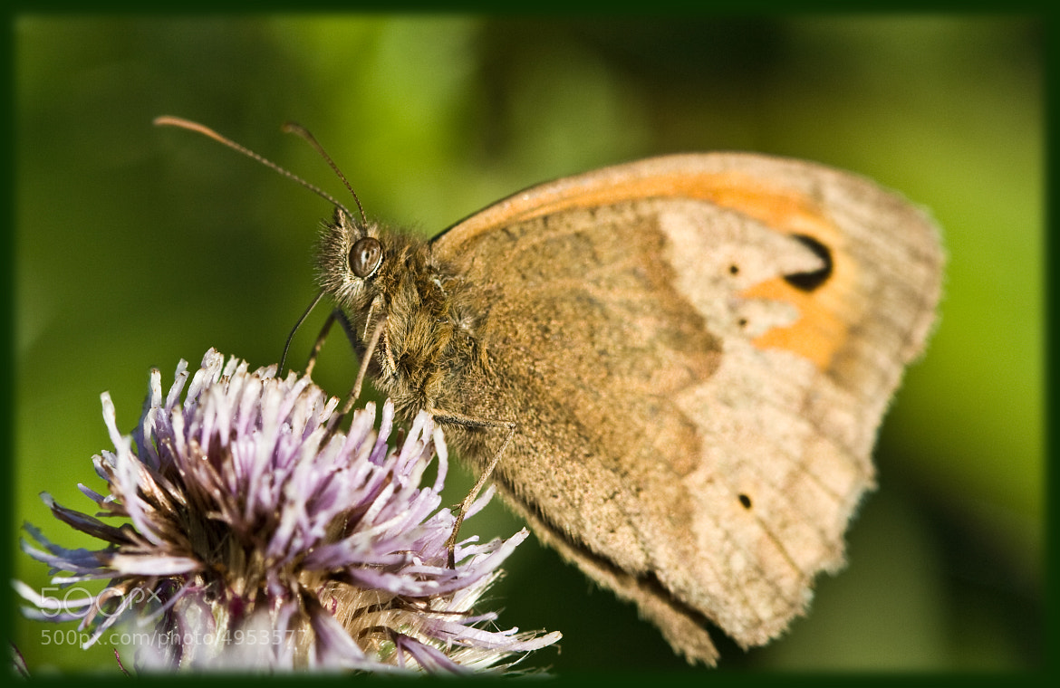 Photograph Butterfly by Donny Walsh on 500px