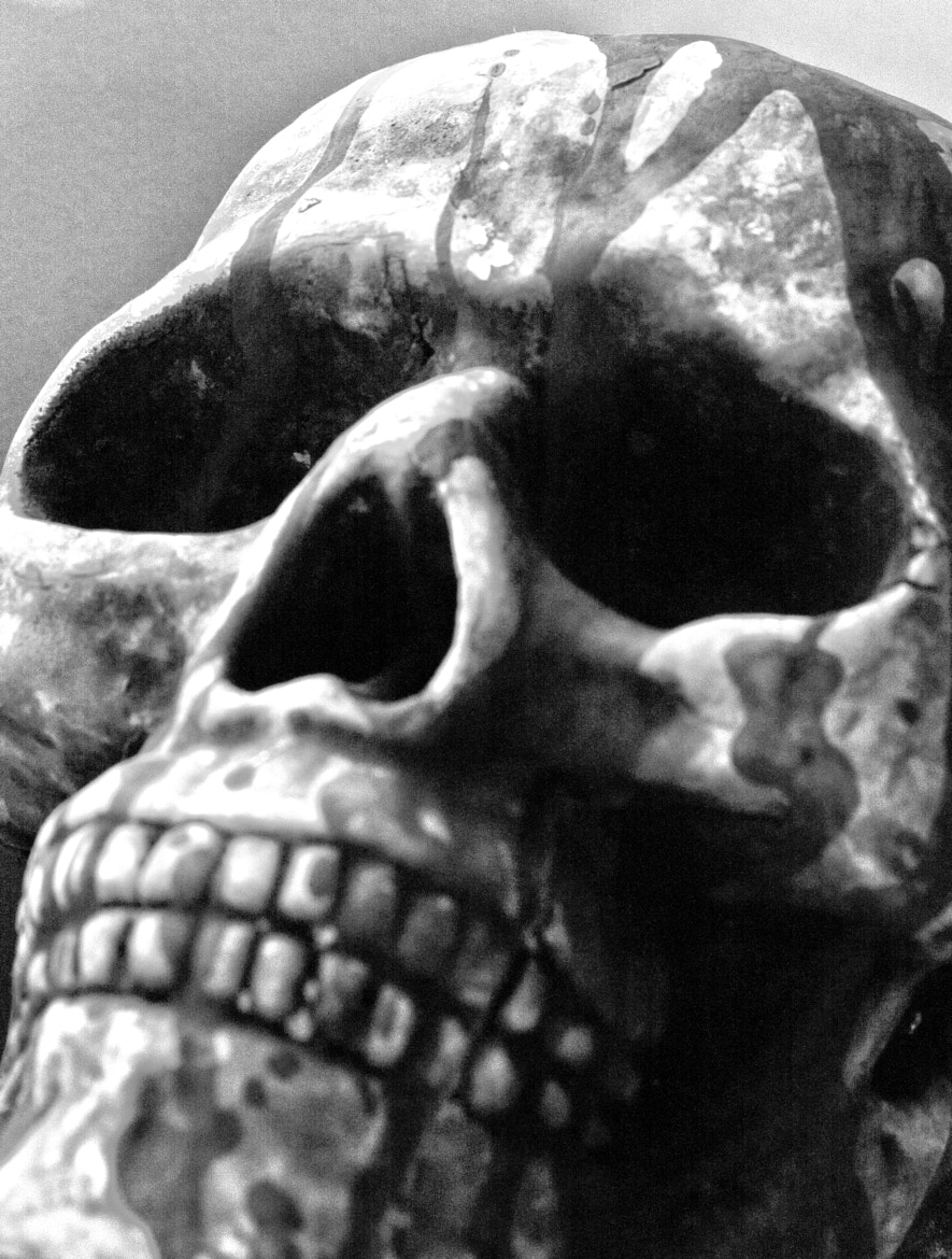 Photograph Mono Skull by Donny Walsh on 500px