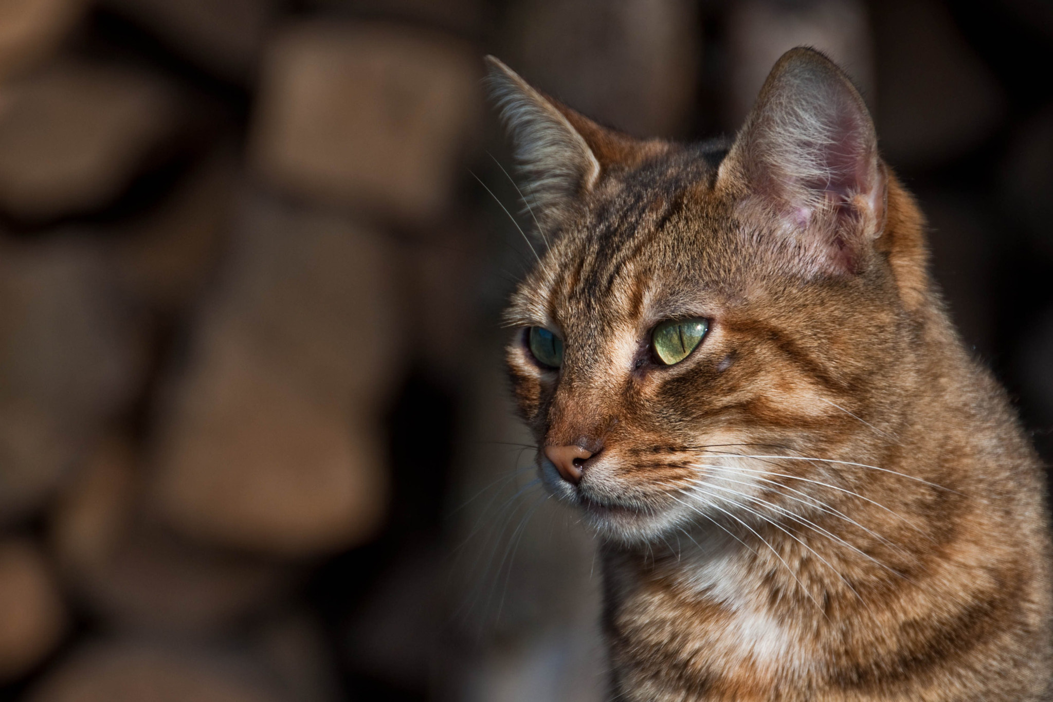 Photograph cat (05) by Vlado Ferencic on 500px