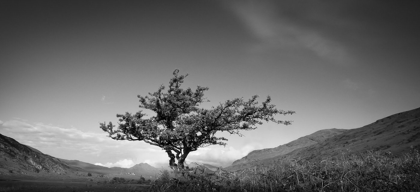 Photograph Lone Tree in the valley, Snowdonia by Paul Winstone on 500px