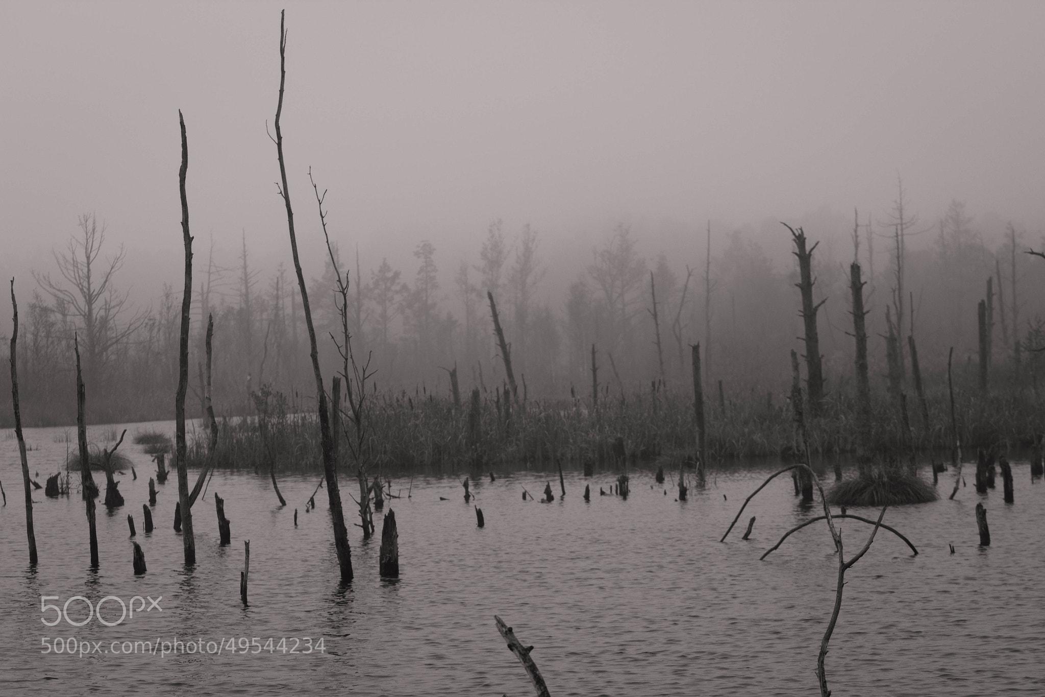 Photograph Moss in Schwenningen Germany by Heike Kitzig on 500px