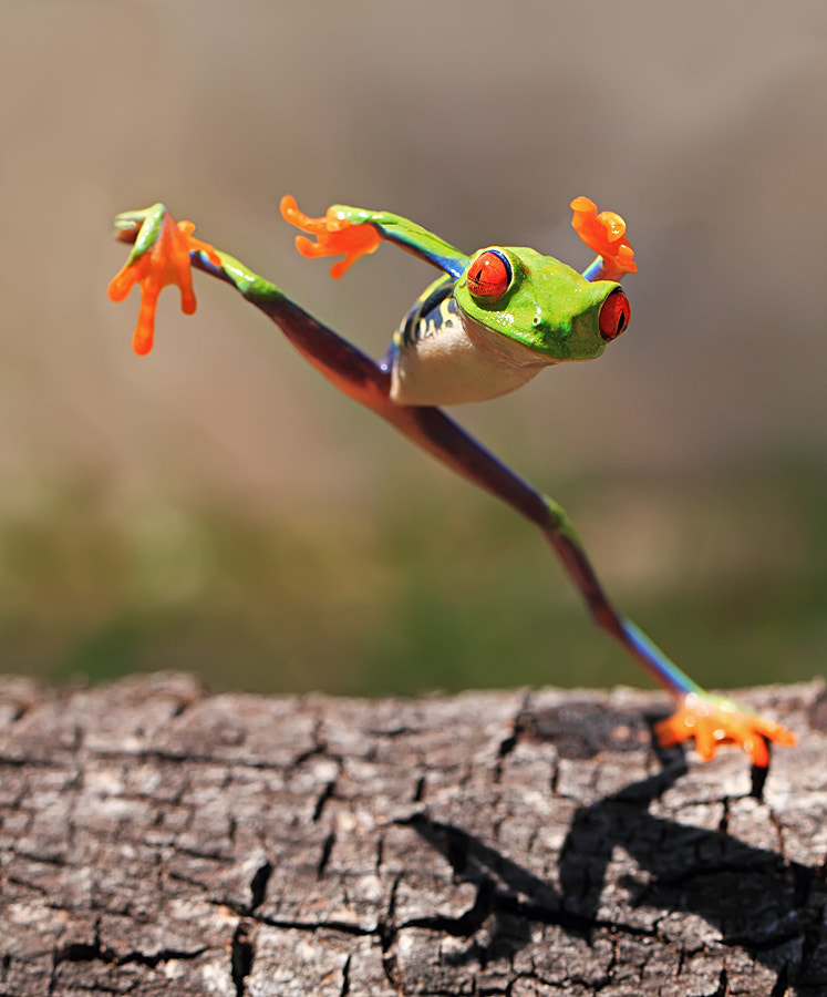 Photograph kungfu frog by shikhei goh on 500px