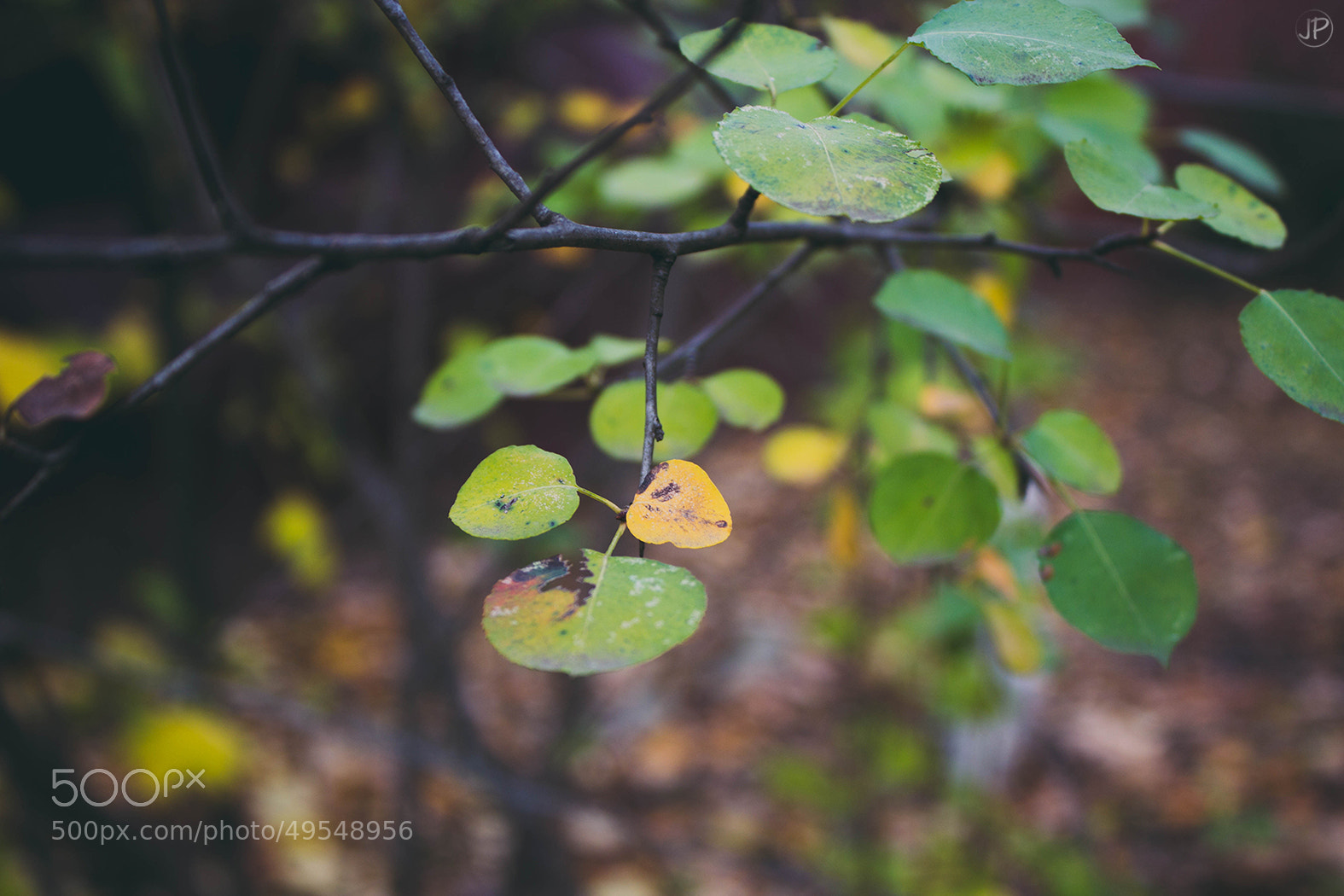 Photograph Cold autumn * by Julia-P on 500px