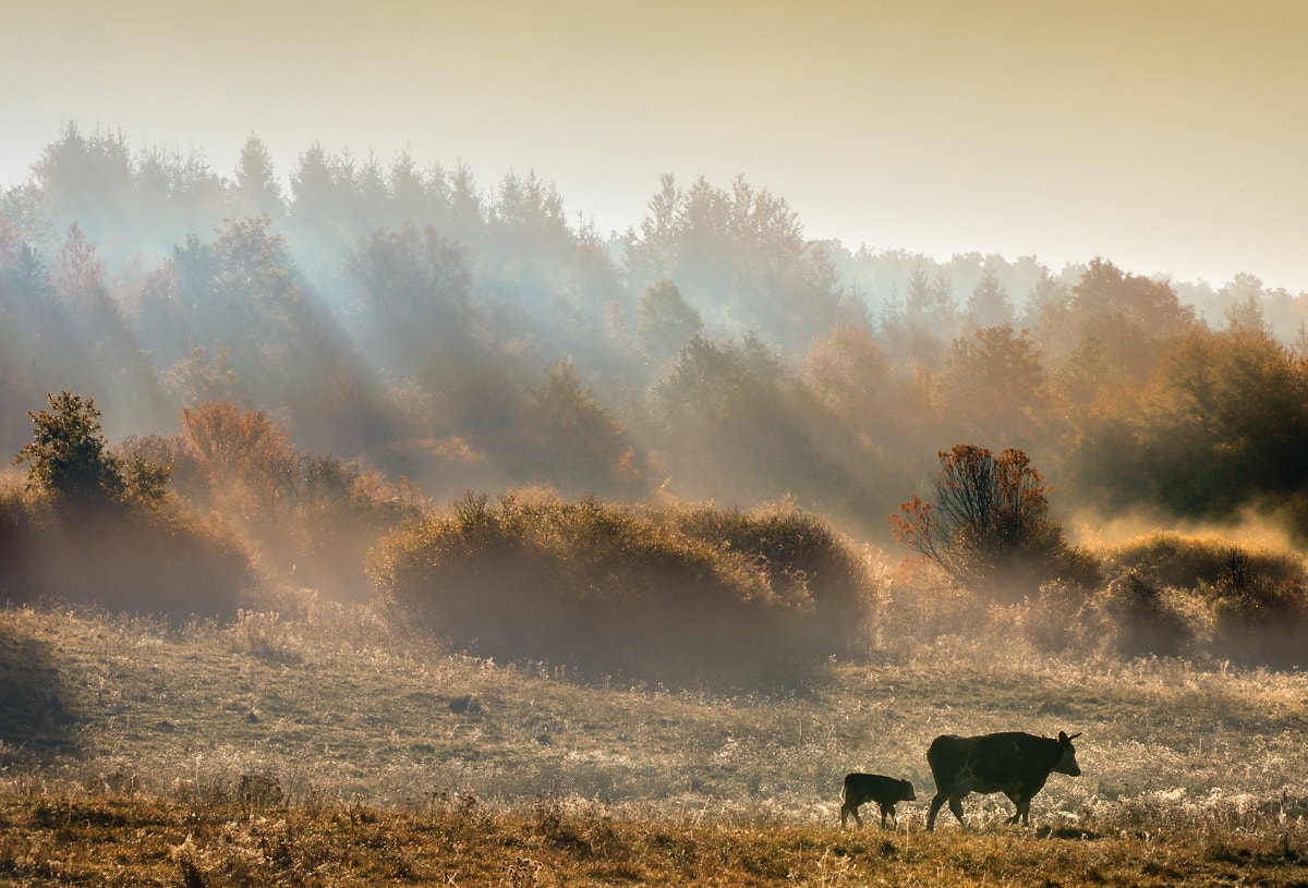 Photograph Autumn Morning by Peter Kováč on 500px