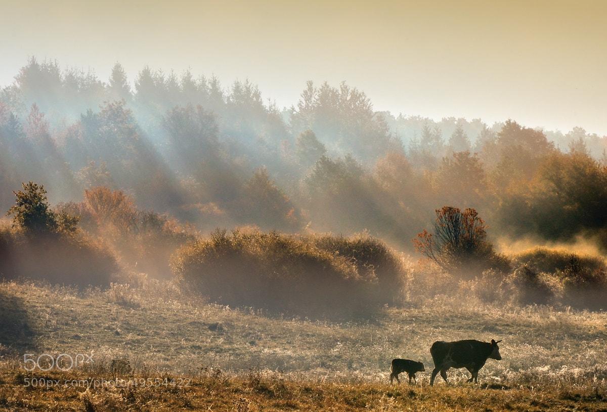 Photograph Autumn Morning by Peter Kováč on 500px