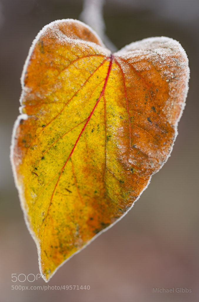 Photograph Frozen Heart by Michael Gibbs on 500px