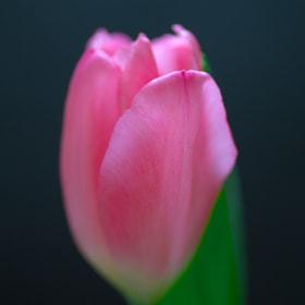 So sweet like a cake. by Duke Uehara (shager1205) on 500px.com