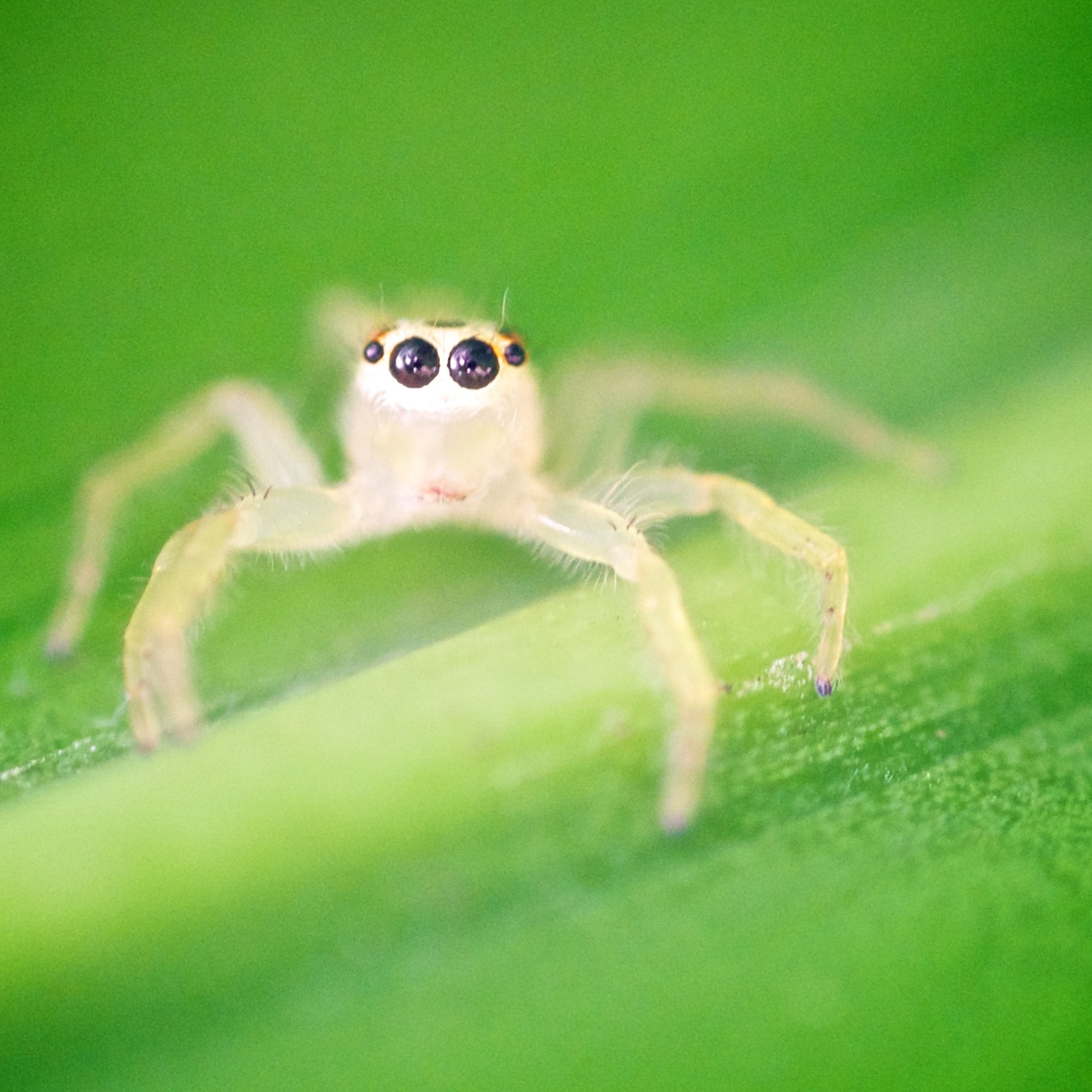 Photograph tiny creature... by Rufo Taguiam on 500px
