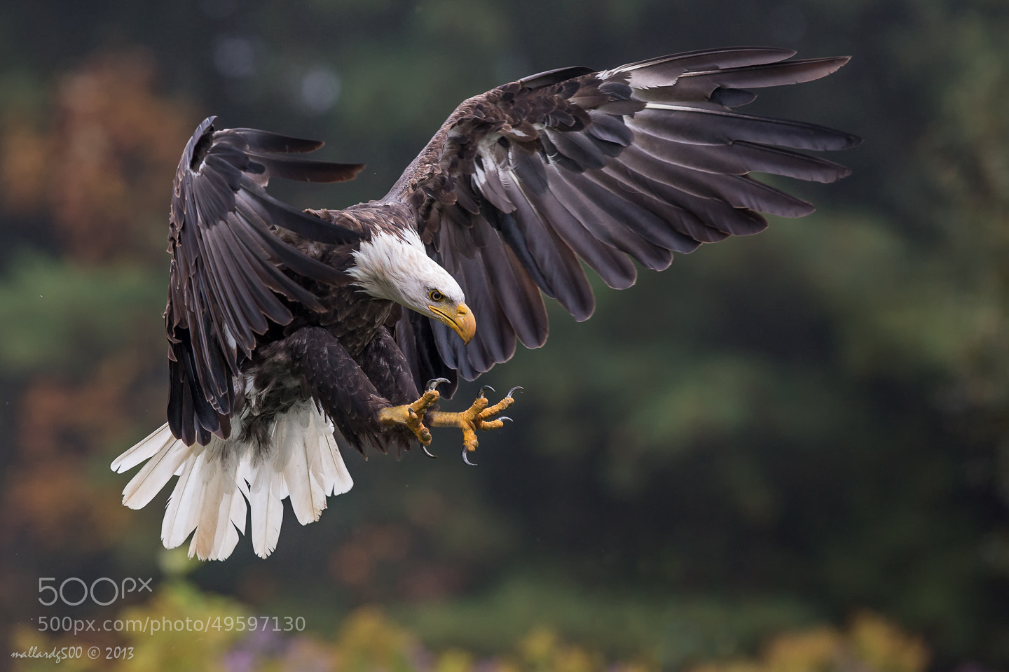 Photograph All about Talons by Phoo (mallardg500) Chan on 500px