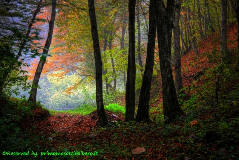 Photograph Autunno  dvd 16 by primo masotti on 500px