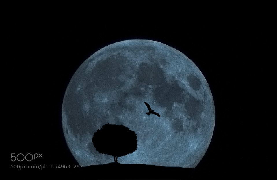 Photograph the BIG moon! by  Kay K. Kataneh on 500px