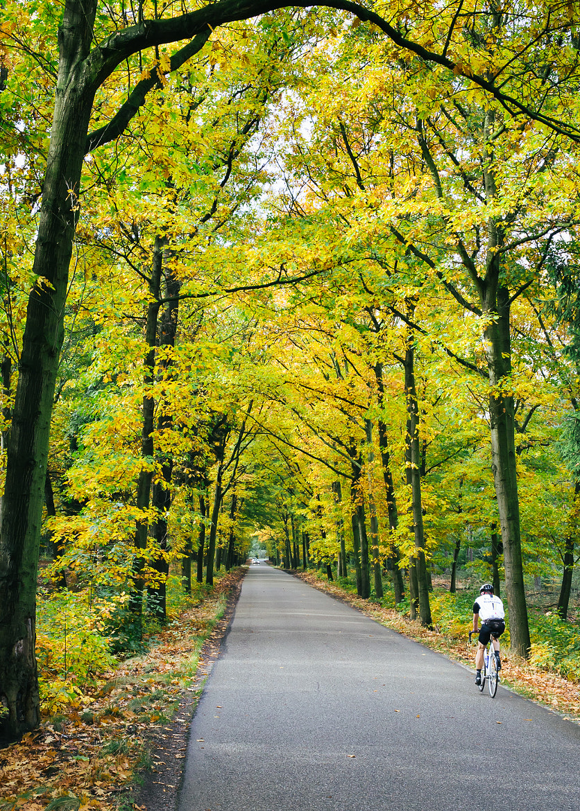Photograph Autumn Ride by Edwin van Nuil on 500px