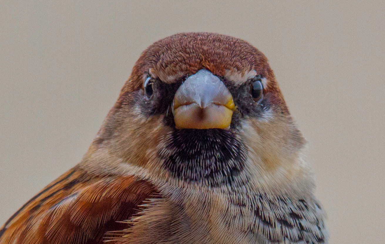 Photograph Angry bird by Giuseppe Scaramucci on 500px