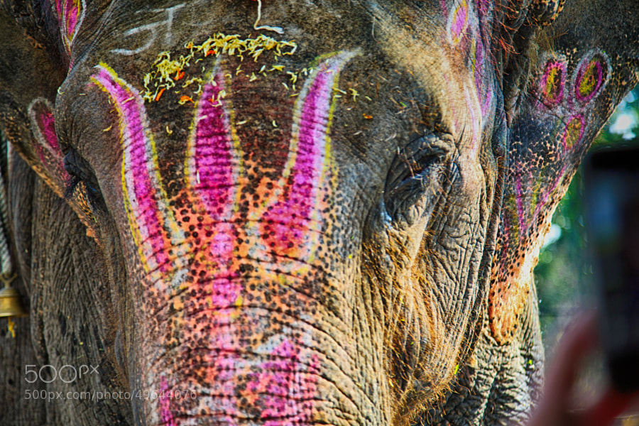 Digital color image of giant Indian elephant poking its head into my taxi window at the marketplace (Indore, India)