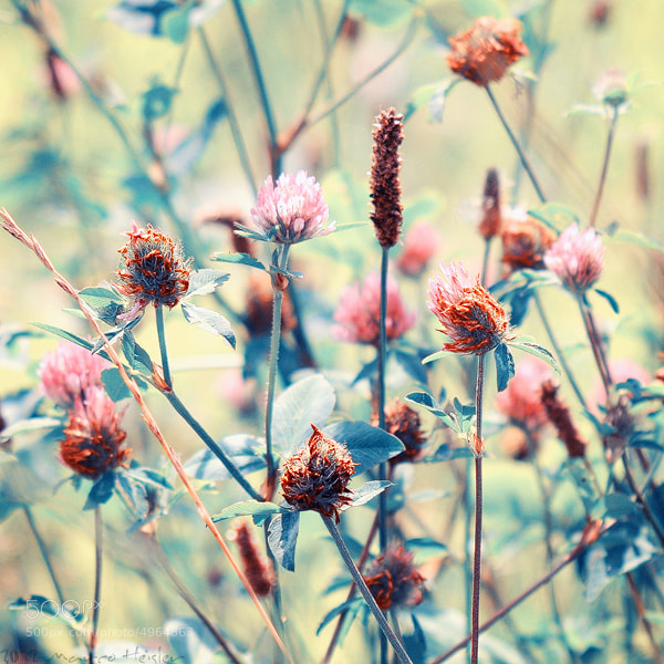 Photograph The Field Of Dreams by Marco Heisler on 500px