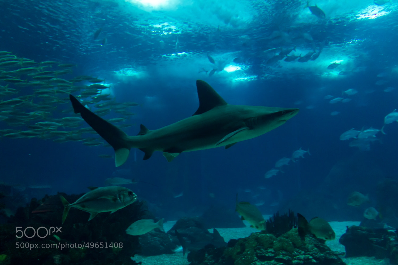 Photograph Shark by Miza Monteiro on 500px