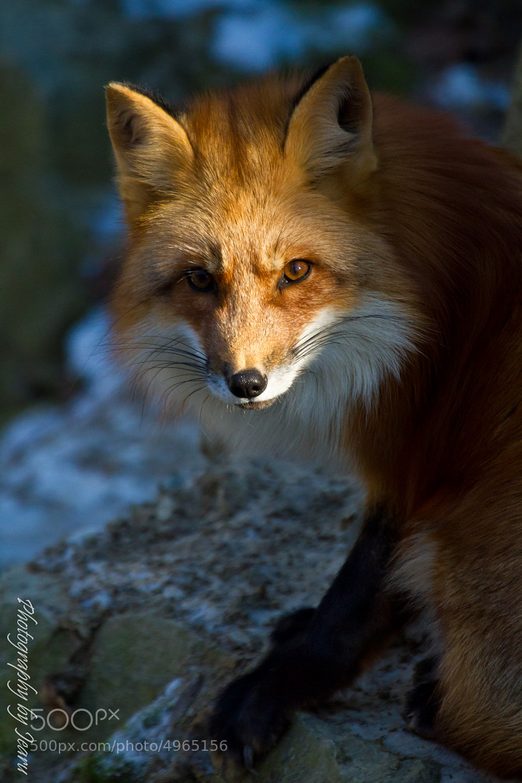 Photograph The last Sunlight by Jeannette Rudloff on 500px