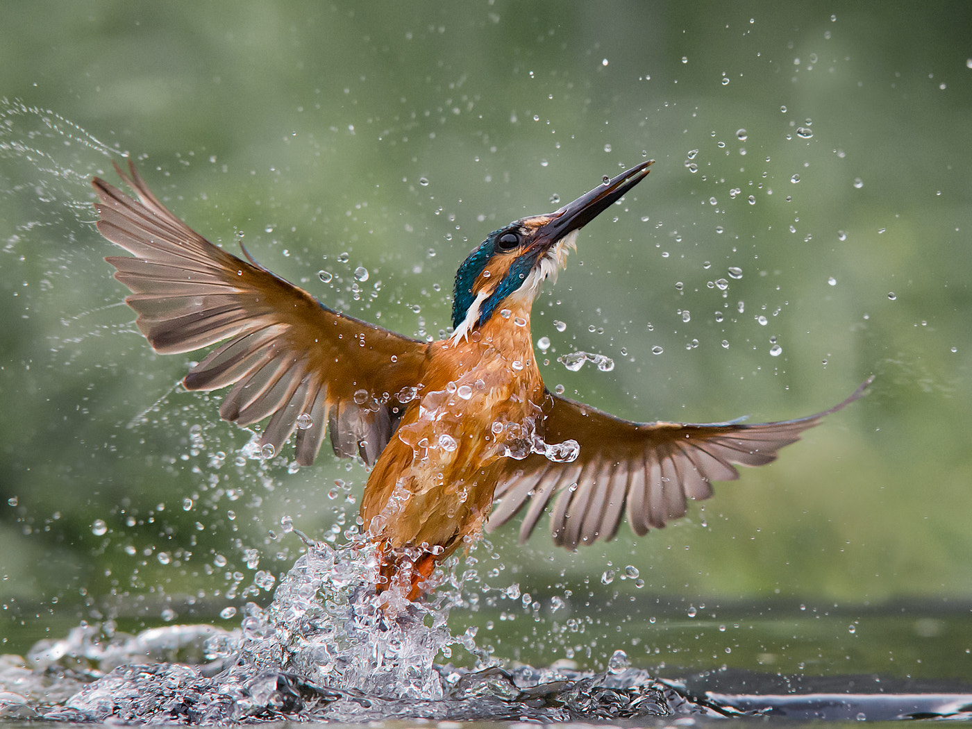 Photograph Water Phoenix by Jamie MacArthur on 500px