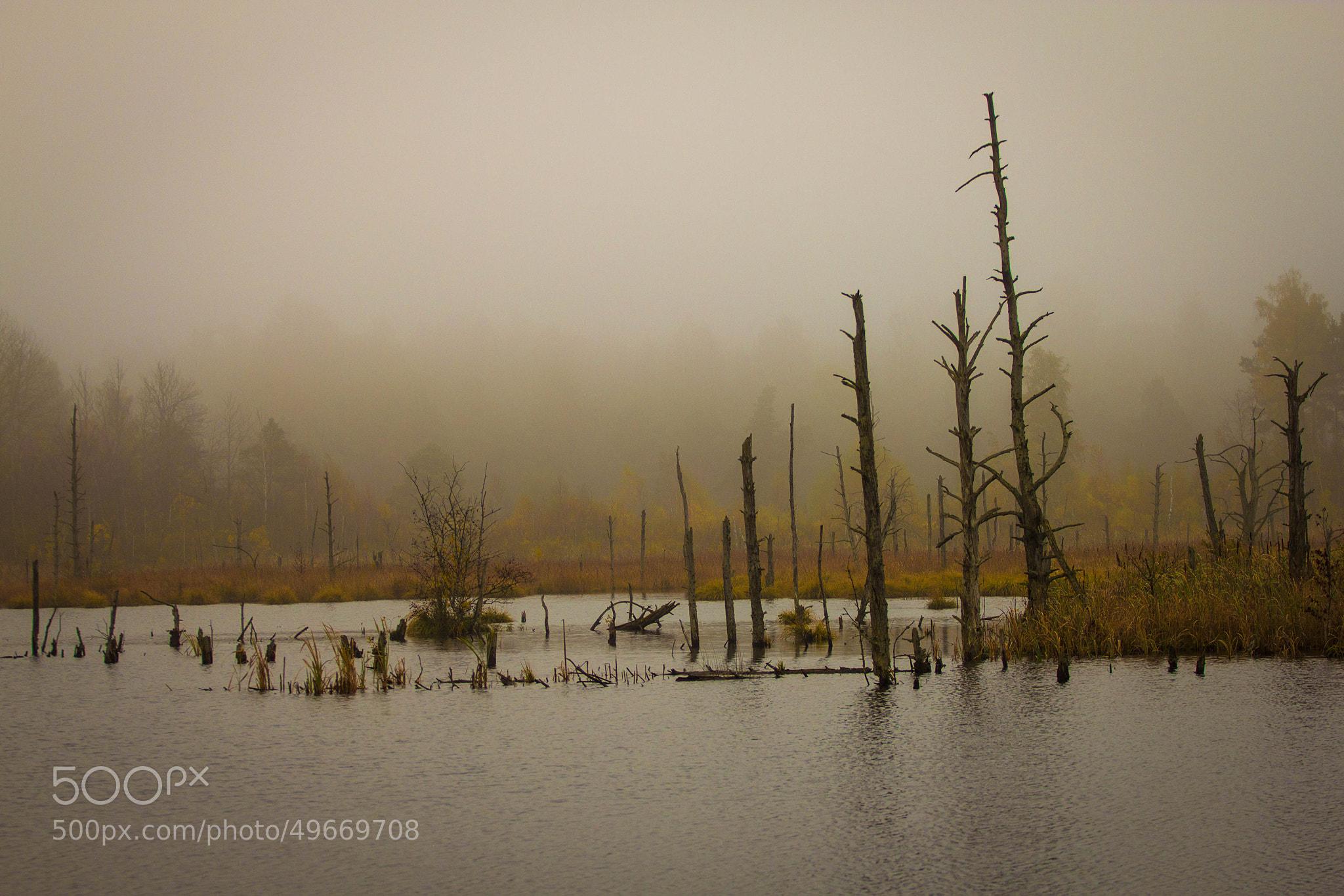 Photograph Autumn in moss in Schwenningen, Germany by Heike Kitzig on 500px